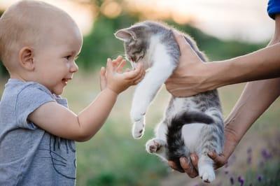 chłopiec bawiący się z kotem