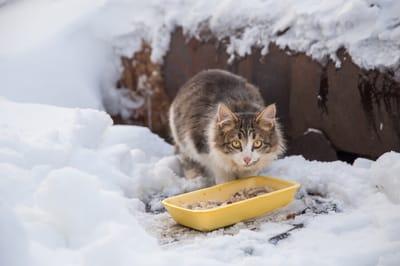 kot bezdomny je z miski zimą