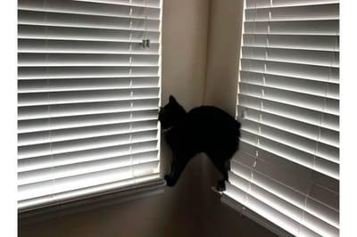 Kot na żaluzjach