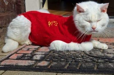 ubranie dla kota