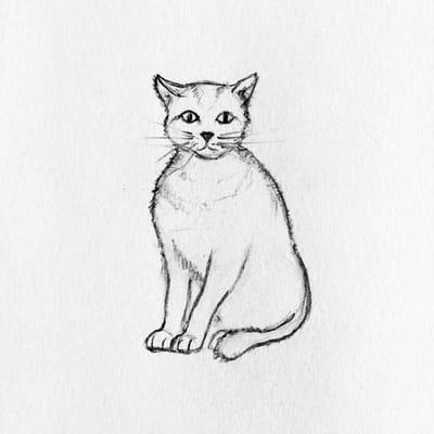 rysunek kota 5