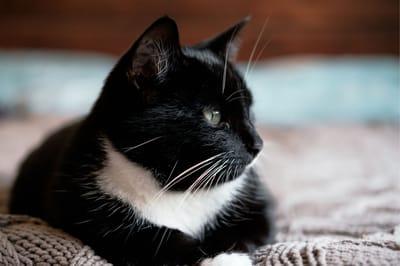 imię dla czarnego kota