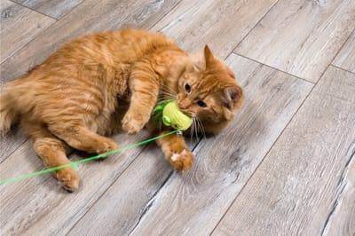 kot bawi się wędką
