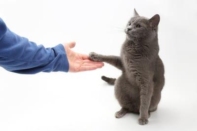 kot podaje łapkę