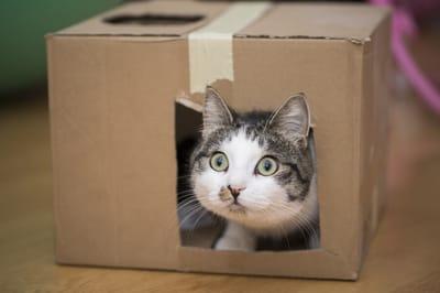 kot w kartonie z dziurami
