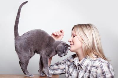 kot się wygina i barankuje głową