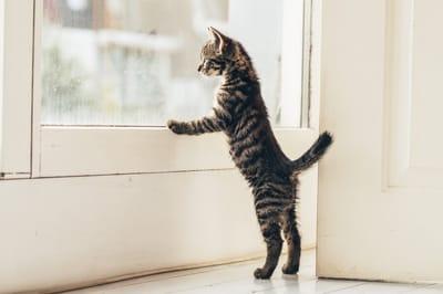 kot wygląda przez okno