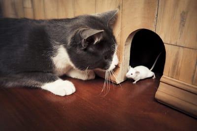 kotek z myszą sennik