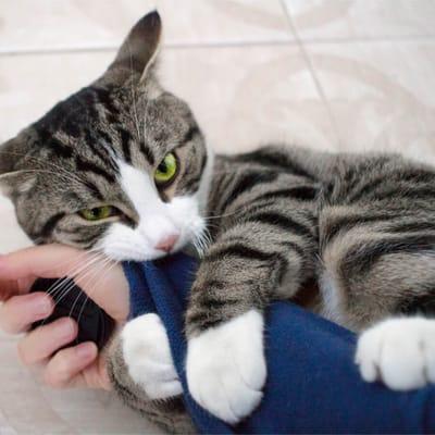 Mały kotek gryzie