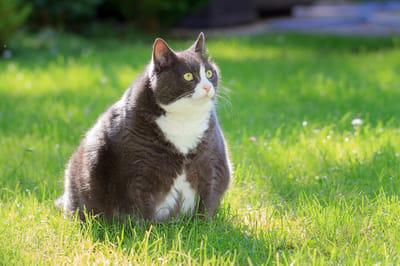 gruby kot na trawie