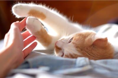ciekawostki o kotach - łapki kota