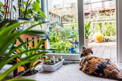 kot między roślinami