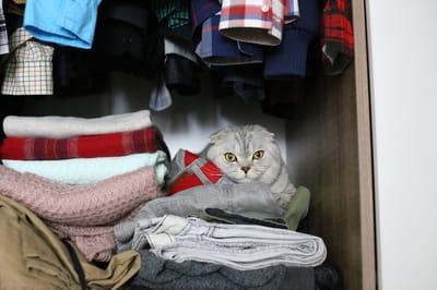 kot-w-szafie
