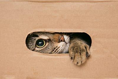 kot wygląda przez otwór w kartonie