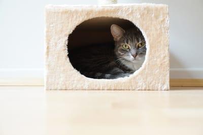kryjówka dla kota