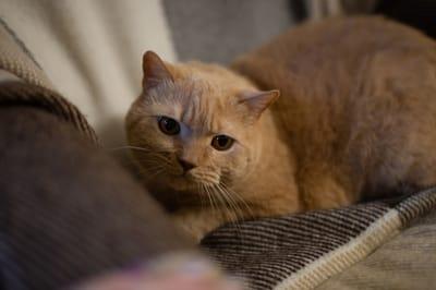 przestraszony rudy kot