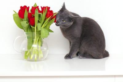 Rośliny cięte dla kota