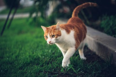 kot na dworze