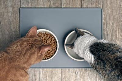 jak nawodnić kota