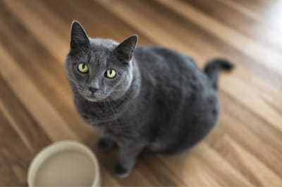 karmienie starego kota