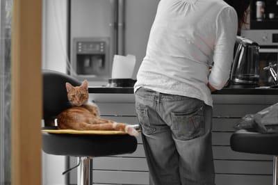 kot w kuchni
