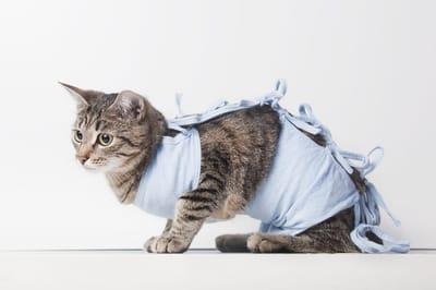 Sterylizacja kotki – możliwe powikłania