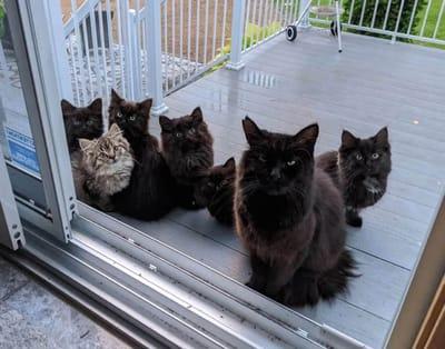 kotki pod drzwiami