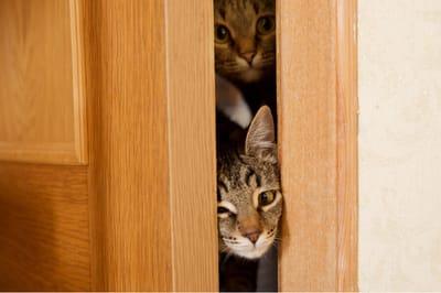 Dlaczego koty nie lubią zamkniętych drzwi