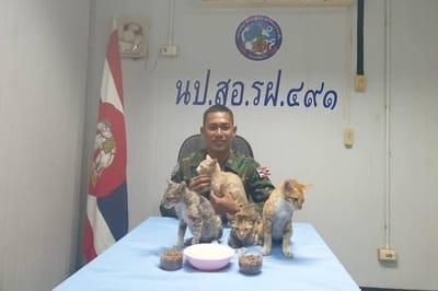 Tajlandia: oficer marynarki wskakuje do wody, aby uratować cztery koty z tonącego statku