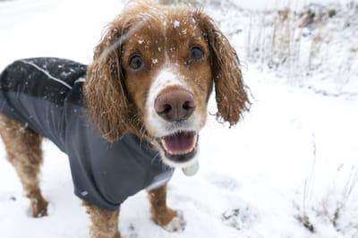 jak wzmocnić odporność psa