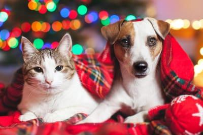 pies i kot boże narodzenie