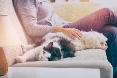 kobieta  z psem i kotem na kanapie