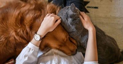 pani z psem i kotem