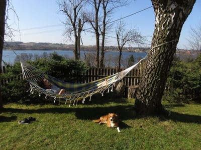 wakacje z psem