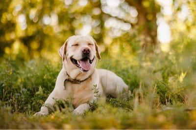 Najłagodniejsze rasy psów
