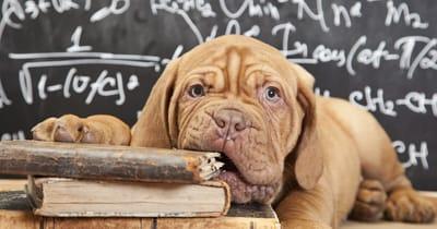 pies gryzie książki