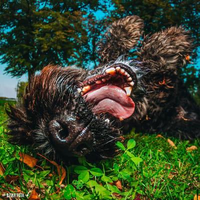 dzika fota pies do adopcji