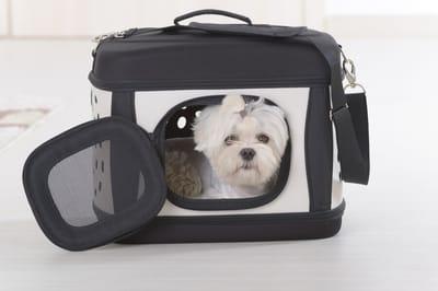 Transporter dla małego psa