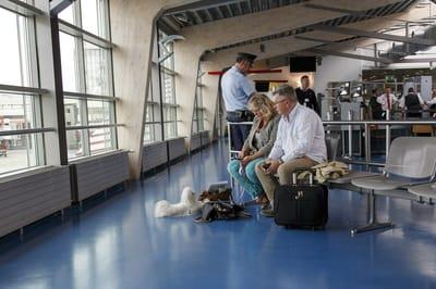podróżowanie z psem samolotem