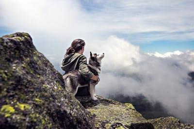 pies na szczycie