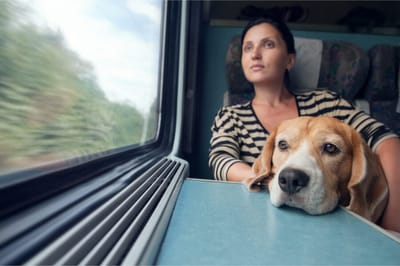 Pies w pociągu