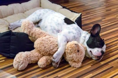 pies i miś