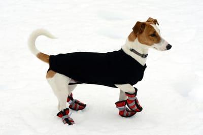 pies w butach mna śniegu