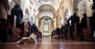 Pies w kościele