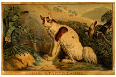 Tahitian perro extinto