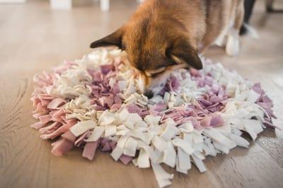 zabawy węchowe z psem