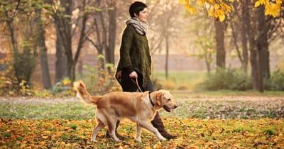 spacer z psem jesienią