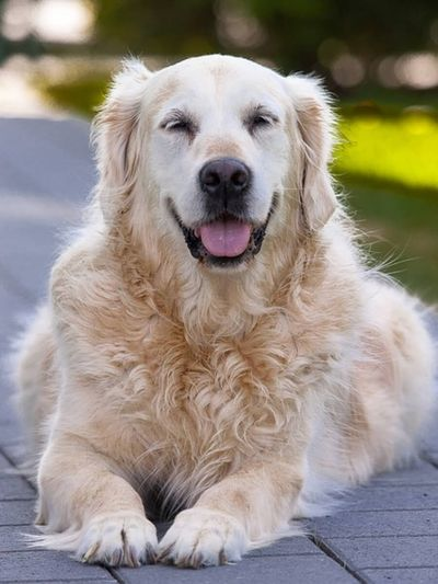 stary niewidomy pies