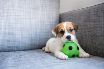 pies sam w domu