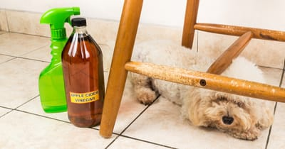 Sprzątanie z psem